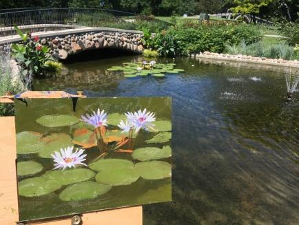 Como pond lotus