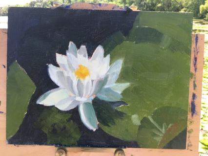 Rogers Lake Lilies